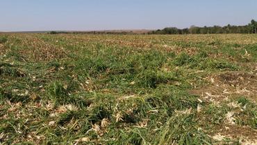 Propriedade Arrendamento Fazenda Agricultura - Pastar Imagens