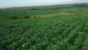 Propriedade Venda Fazenda Agricultura - Pastar Imagens