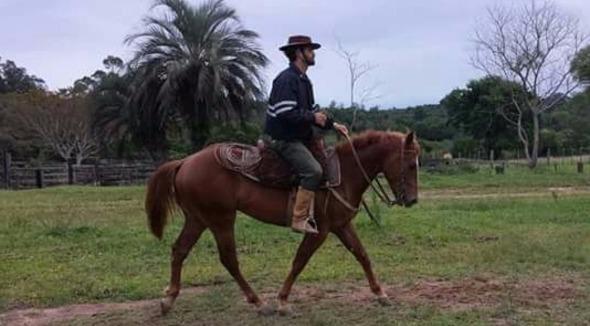 Equídeo Equino Quarto de Milha Registrado Potro Alazã Trabalho - e-rural Imagens