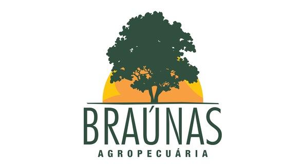 Bovino Corte Brahman Novilha - Pastar Imagens