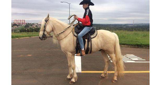 Equídeo Equino Mangalarga Marchador Não Registrado Cavalo Baia Marcha de Centro - Pastar Imagens