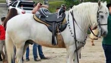 Equídeo Equino Andaluz Registrado Cavalo - e-rural Imagens