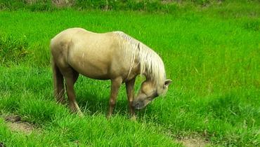 Equídeo Equino Diversos Não Registrado Cavalo - Pastar Imagens
