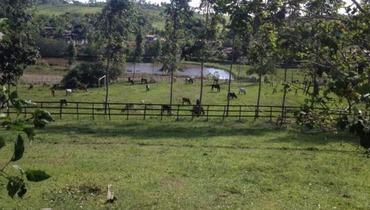 Propriedade Aluguel Fazenda Mista - Pastar Imagens