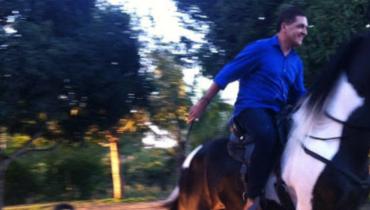 Equídeo Equino Campolina Comunicado Cavalo Pampa Marcha Picada - Pastar Imagens