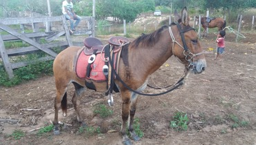 Equídeo Muare - e-rural Imagens