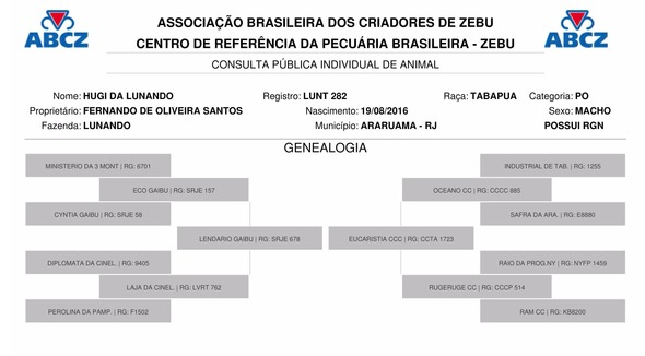 Bovino Corte Tabapuã Touro 16-20@ - Pastar Imagens