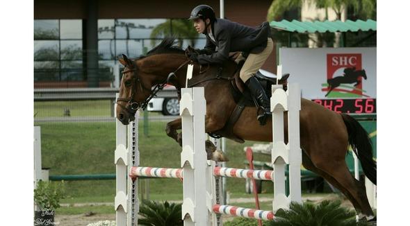 Equídeo Equino Diversos Registrado Cavalo Castanha Trabalho - Pastar Imagens