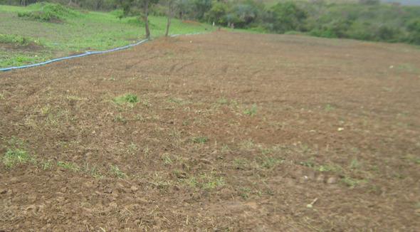 Propriedade Arrendamento Fazenda Agricultura - e-rural Imagens