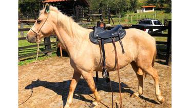 Equídeo Equino Diversos Não Registrado Cavalo Baia Trabalho - e-rural Imagens