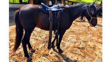 Equídeo Equino Diversos Não Registrado Cavalo Preta - Pastar Imagens
