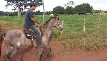Equídeo Equino Mangalarga Registrado Égua - Pastar Imagens