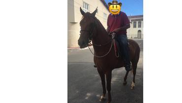 Equídeo Equino Mangalarga Marchador Não Registrado Cavalo Alazã Marcha Picada - e-rural Imagens