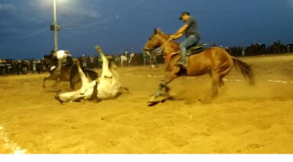 Equídeo Equino Quarto de Milha Registrado Potra Zaina Corrida - e-rural Imagens