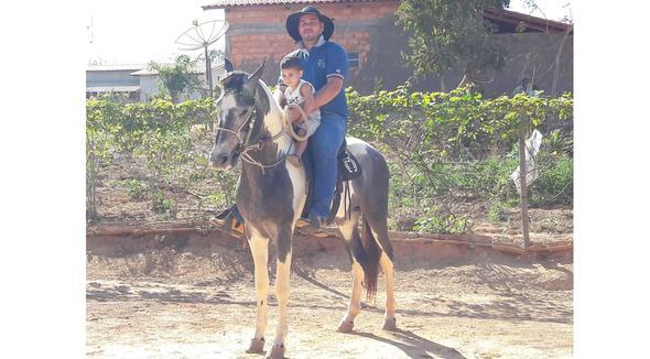 Equídeo Equino Mangalarga Marchador Registrado Potro Tordilha Marcha Batida - e-rural Imagens