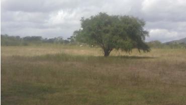 Propriedade Aluguel Fazenda - e-rural Imagens