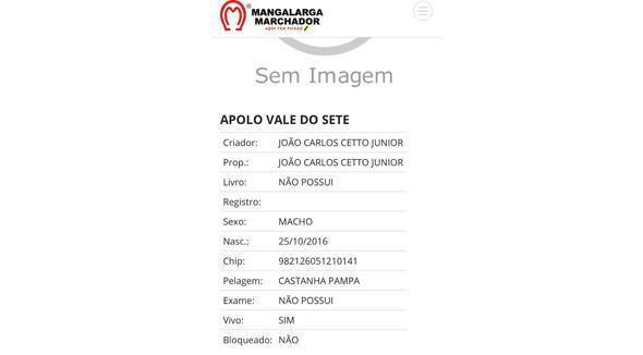 Equídeo Equino Mangalarga Marchador Não Registrado Cavalo Castanha - e-rural Imagens