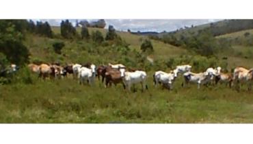 Propriedade Aluguel - e-rural Imagens