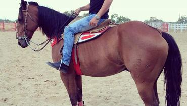 Equídeo Equino Quarto de Milha Registrado Cavalo Castanha Trabalho - e-rural Imagens