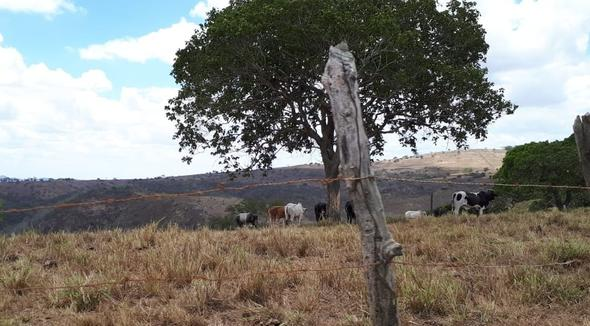 Propriedade Venda Fazenda Pecuária - e-rural Imagens