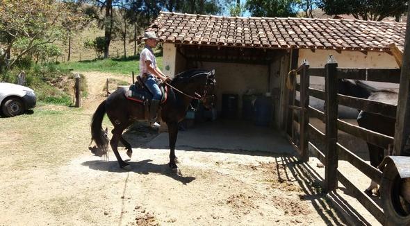 Equídeo Equino Mangalarga Marchador Registrado Égua Preta Marcha Batida - e-rural Imagens