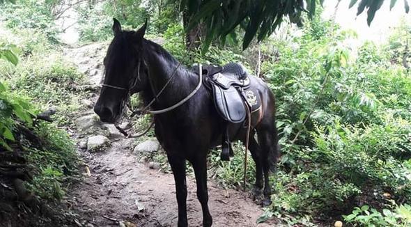 Equídeo - e-rural Imagens