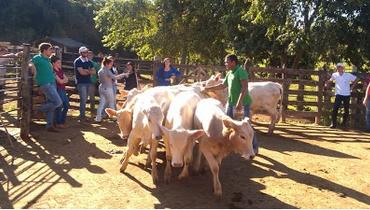 Bovino Corte Canchim Bezerro 6-10@ - e-rural Imagens