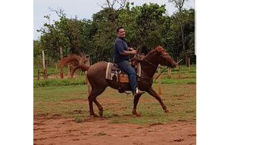 Equídeo Equino Quarto de Milha Registrado Cavalo Alazã Trabalho - e-rural Imagens