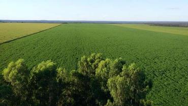 Propriedade Venda Fazenda Agricultura 500 ha - 1000 ha - Pastar Imagens