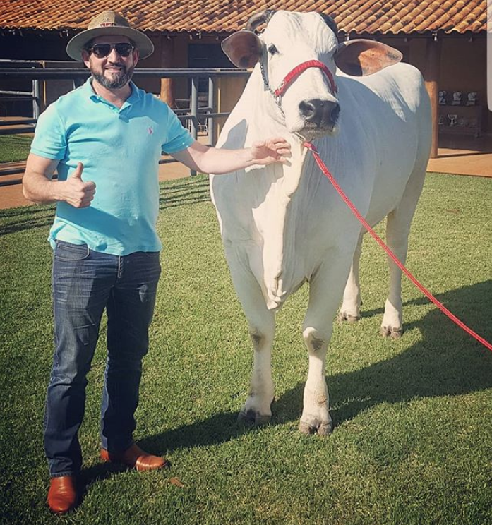 Conheça os cinco bovinos Nelore mais valorizados de todos os tempos-1