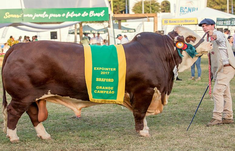 Brasil exporta material genético de touro braford campeão