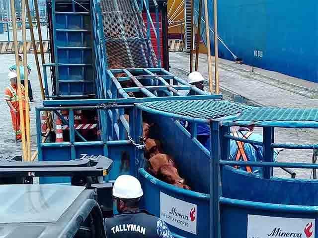Entidades se manifestam contra embargo à exportação de gado-1