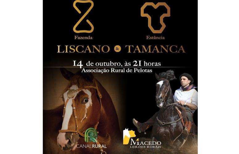 Liscano & Estância Tamanca trazem o melhor da raça Crioula