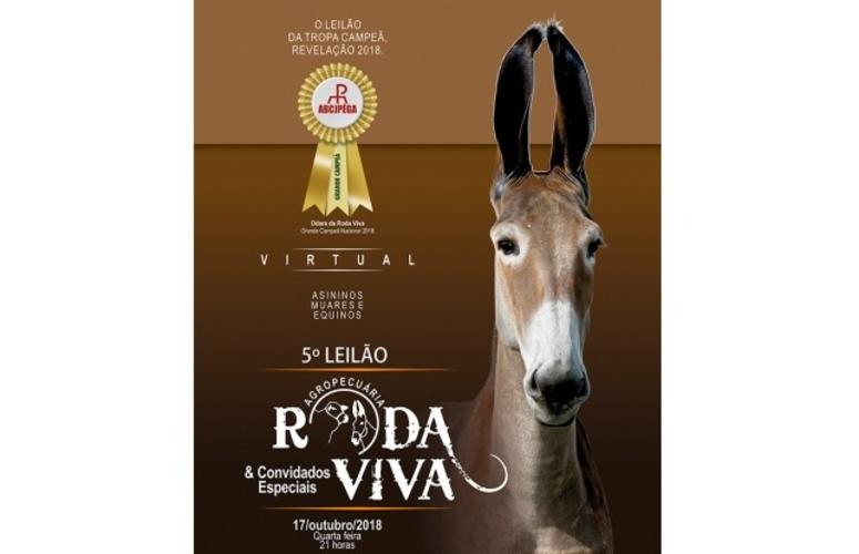 Agropecuária Roda Viva oferta asininos, muares e equinos