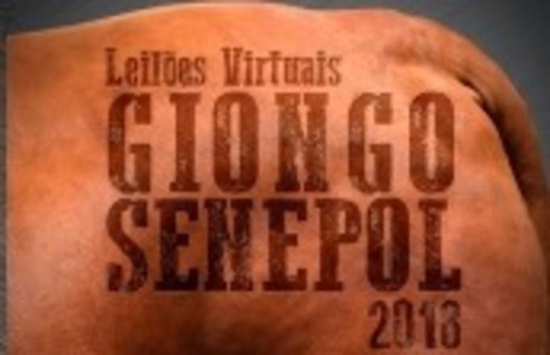 Giongo Senepol oferta ao mercado novilhas e touros da raça