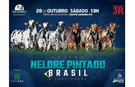 Leilão Nelore Pintado Brasil comemora 4 anos de expansão