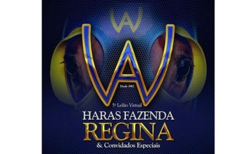 Haras Fazenda Regina oferta campeões de corrida do Quarto de Milha