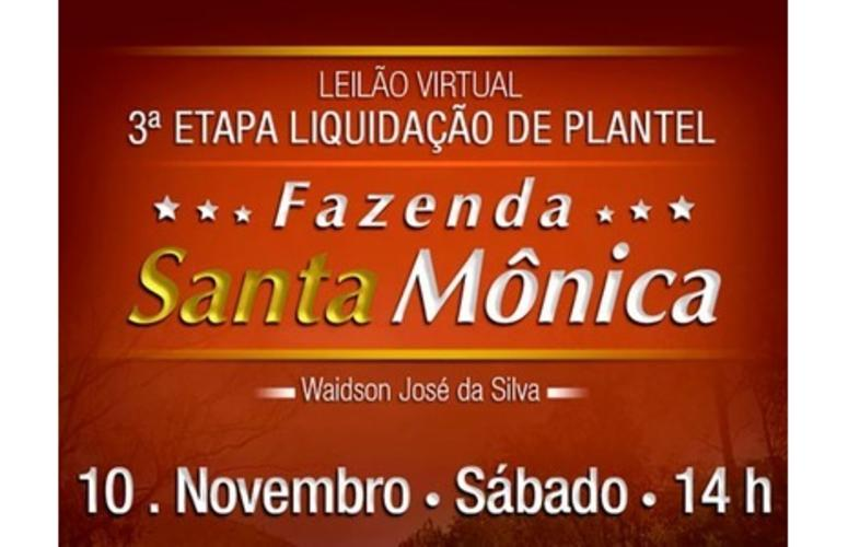Fazenda Santa Mônica promove nova etapa de liquidação de plantel