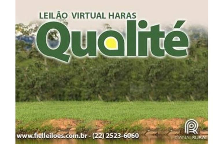 Leilão Virtual Haras Qualité oferta 44 lotes de Mangalarga Marchador
