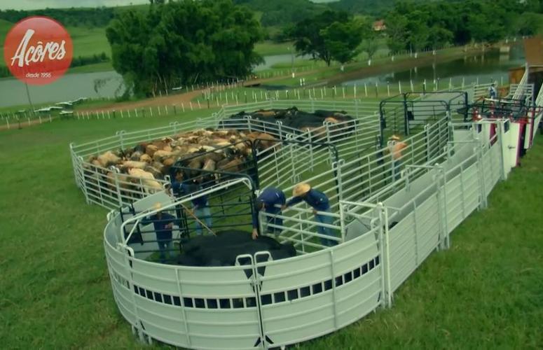 Troncos e Balanças Açores promove o Dia da Pecuária Alta Performance
