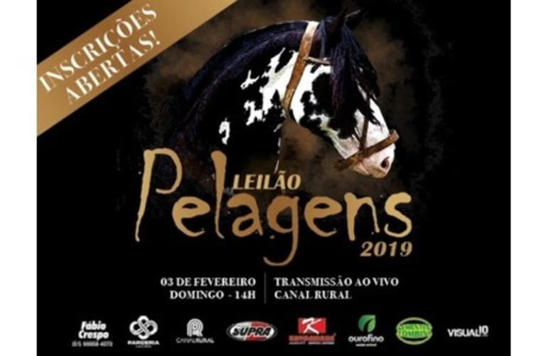 Leilão Pelagens oferta coberturas e cavalos Crioulos neste domingo