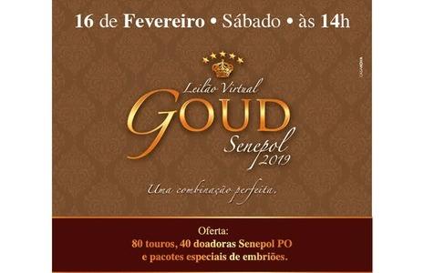 Goud Senepol prepara oferta de touros, doadoras e pacotes de embriões