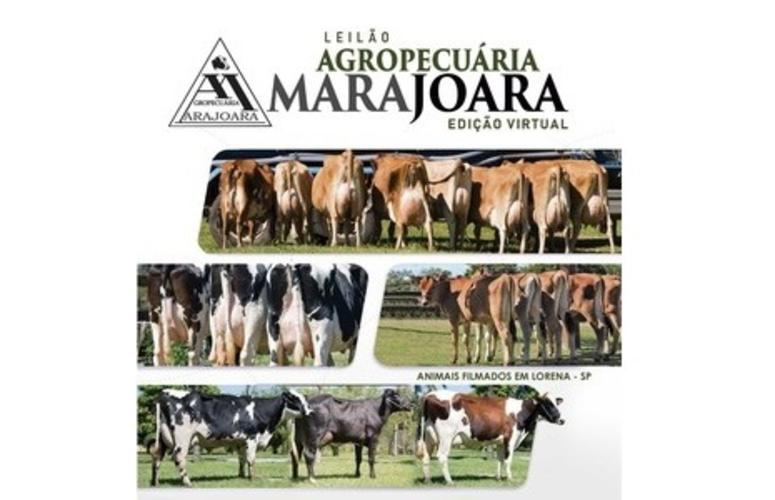 Agropecuária Marajoara faz leilão de gado leiteiro no próximo dia 17