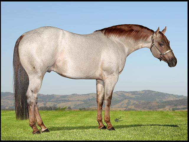 Leilão Paddock Ranch completa 15 anos de contínua evolução-1