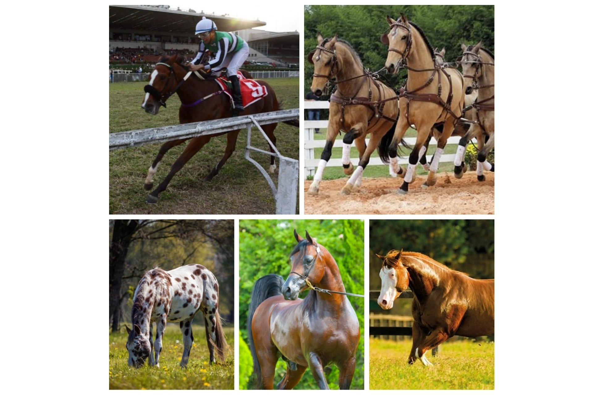 Confira as raças de cavalo estrangeiras com maior presença no Brasil