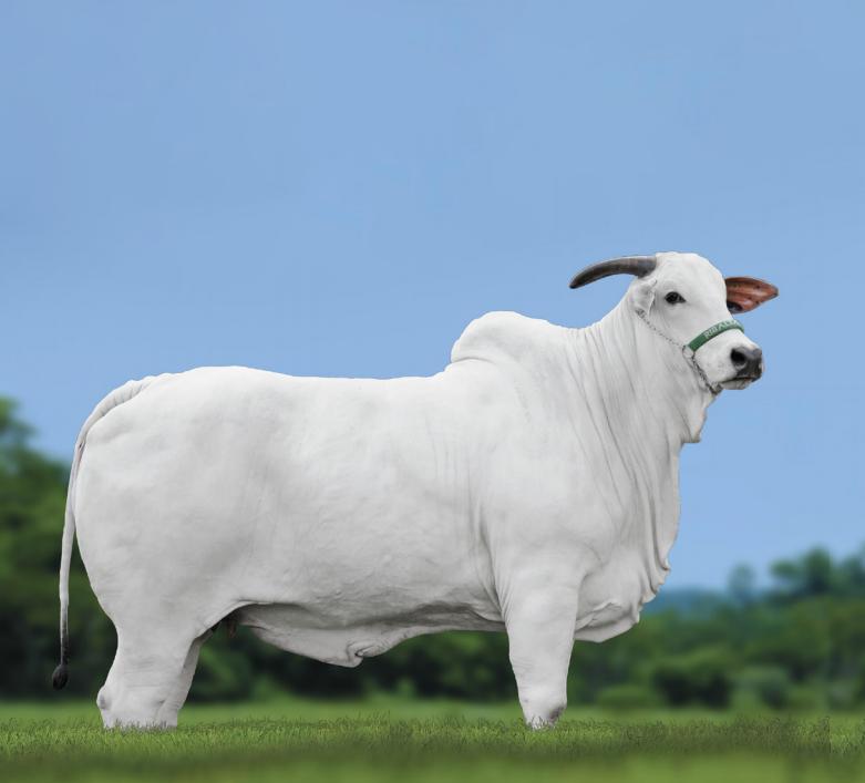 Ribalta MSA oferta animais selecionados em leilão especial-1