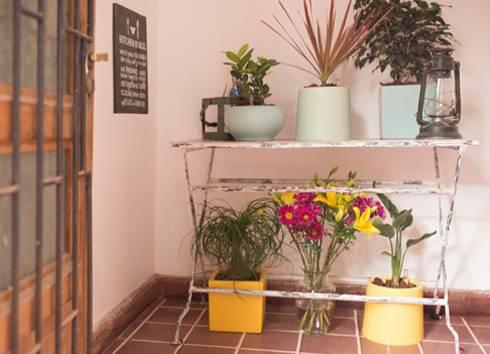 Las plantas: de interior y de exterior