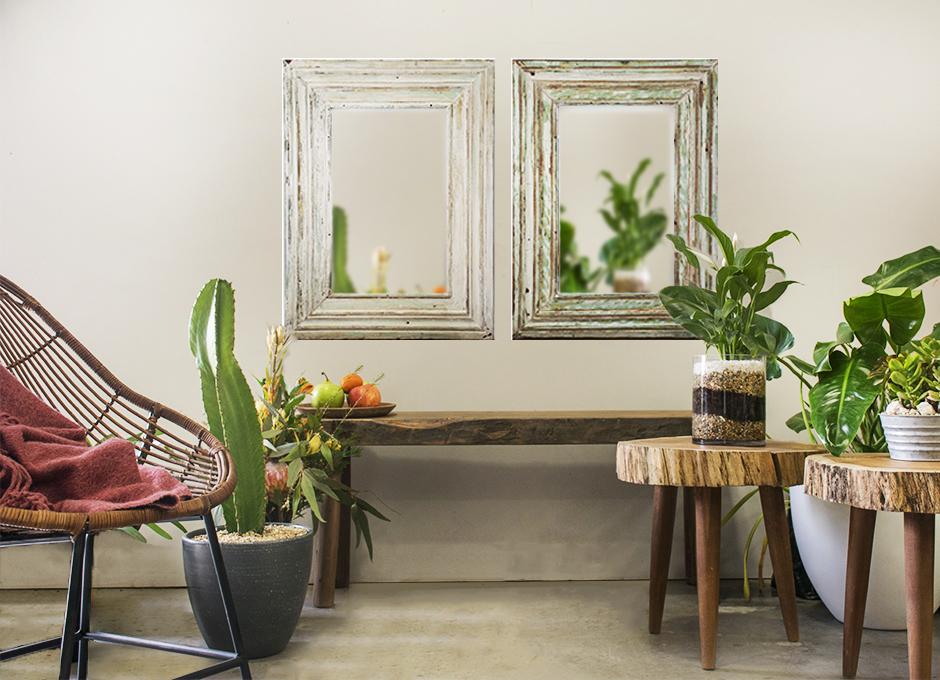 Decora la casa con plantas y rodéate de naturaleza