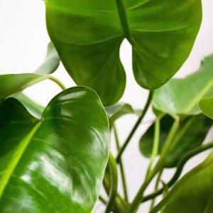 detalle planta grande