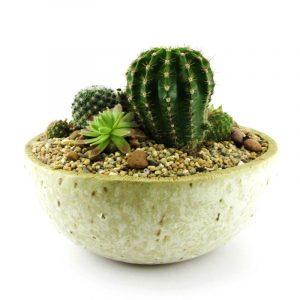 Mini jardín de cactus 1C